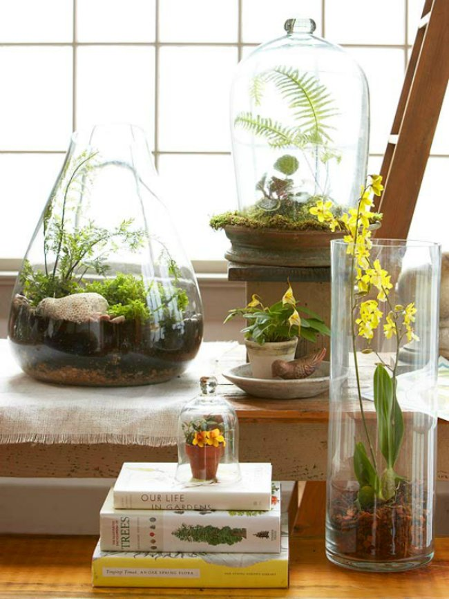 Beginner's Guide on How to Make a Terrarium in 5 Easy Steps