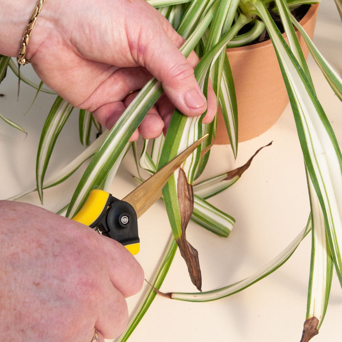 How to Trim Your Plants in 5 Simple Steps