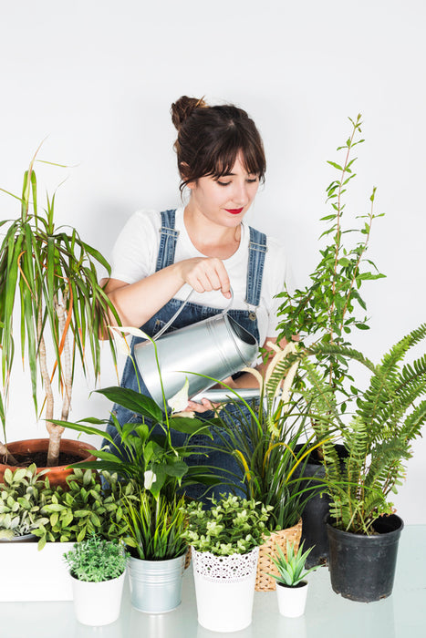 Beginner's Guide on How to Water Houseplants Correctly