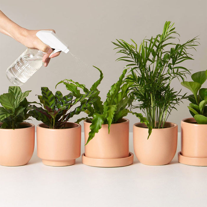 6 Simple Ways to Increase the Humidity for Houseplants