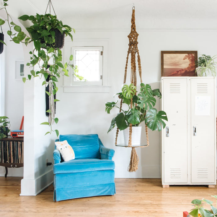 The 10 Best Indoor Hanging Plants to Decorate Your Home