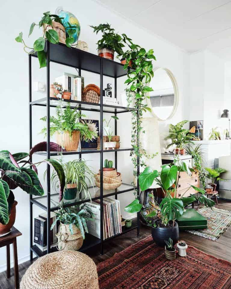 7 Instagram-Worthy Plants You Must Have in Your Home