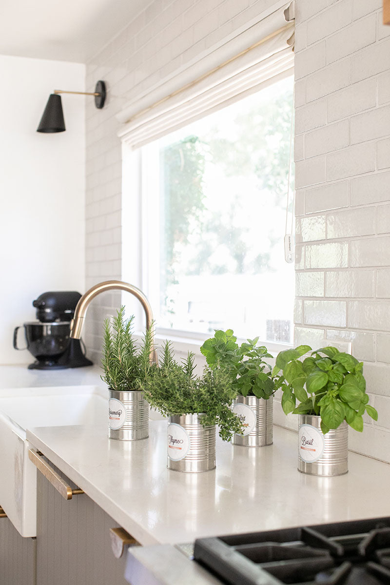 Step-by-Step Guide on How to Grow a Thriving Kitchen Herb Garden