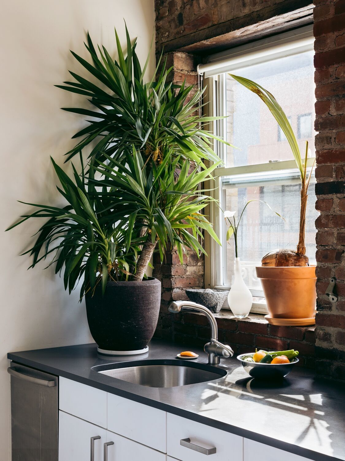 10 Best Kitchen Plants to Enliven Your Cooking Space