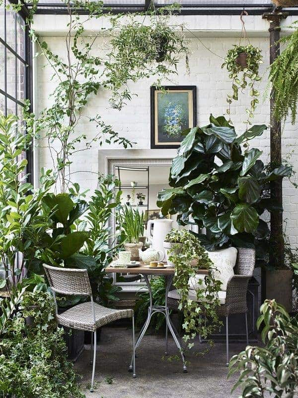 11 Best Large Indoor Plants You Must Have in Your Home