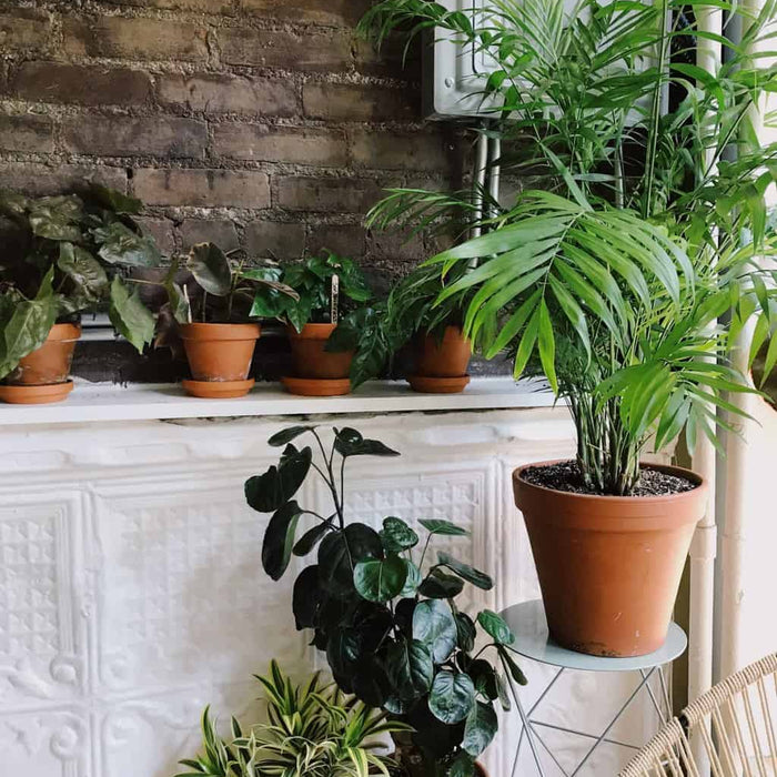 15 Best Low Light Indoor Plants to Add to Your Home