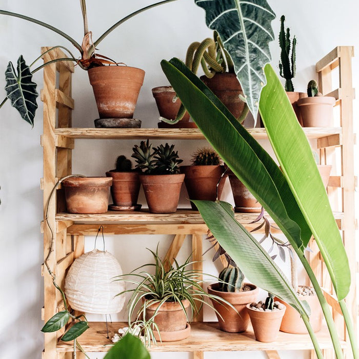 9 Lucky Indoor Plants to Bring Good Health, Love, and Wealth