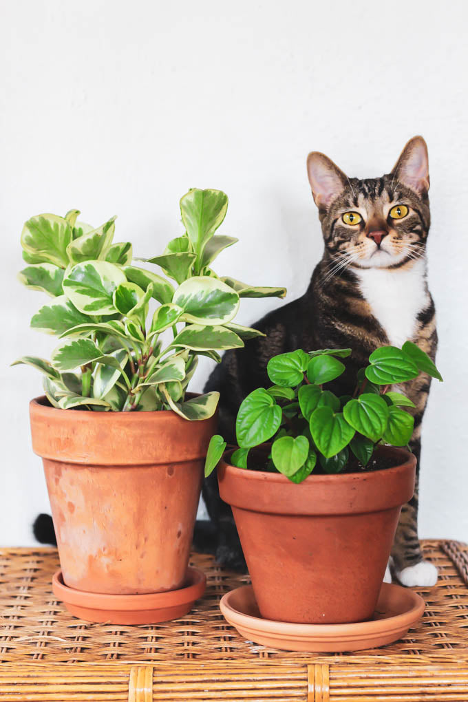 11 Pet-Friendly Houseplants to Spruce Up Your Home