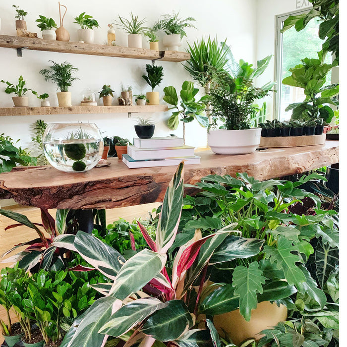 What Indoor Plant Should You Buy According to Your Plant Parent Personality