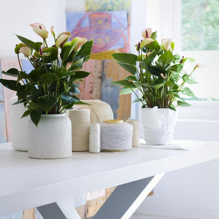 10 Beautiful Small Indoor Plants for Small Space Dwellers