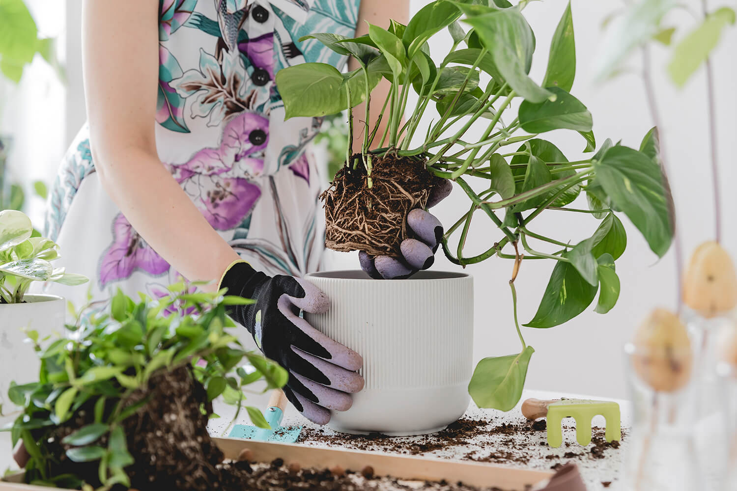 7 Effective Tips on How to Keep Your Plants Alive