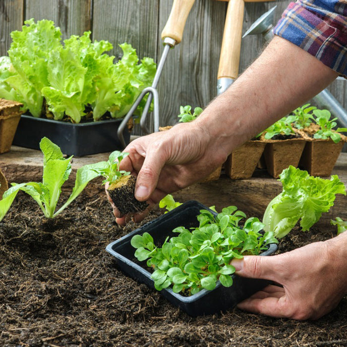 7 Vegetable Gardening Tips and Tricks for Beginners