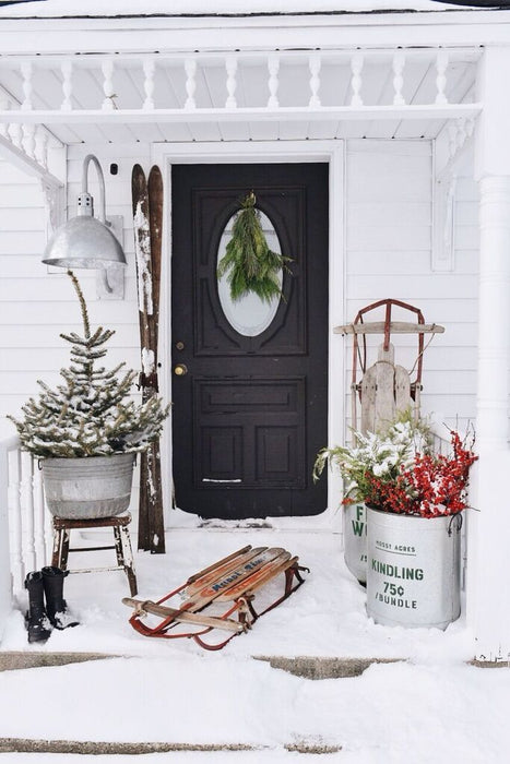 10 Hardy Winter Indoor Plants to Cheer Up Your Home
