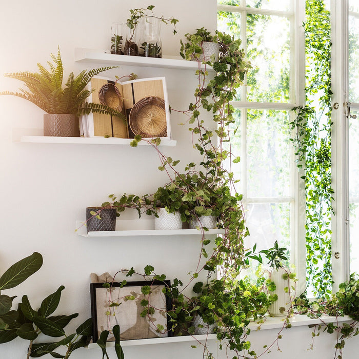 Step-by-Step Guide on How to Make a Beautiful Plant Wall