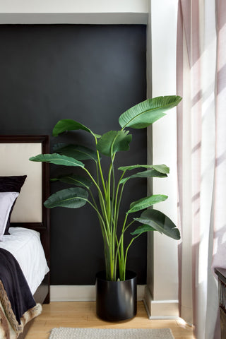 Bird of Paradise Plant Care