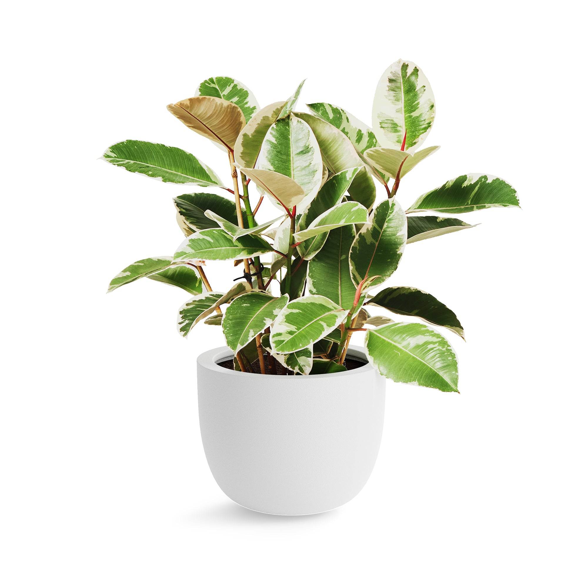 Large Round Planter - White