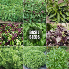 Load image into Gallery viewer, 9 Kinds of Basil Seeds (50 Seeds/Pack) Kitchen Seasoning Herbs Plant Seeds for Garden