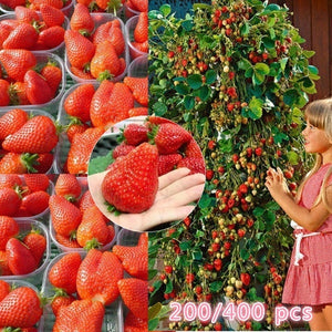 200/400Pcs Red Climbing Strawberry Seeds Bonsai Sweet and Delicious Fruit Plant Seed