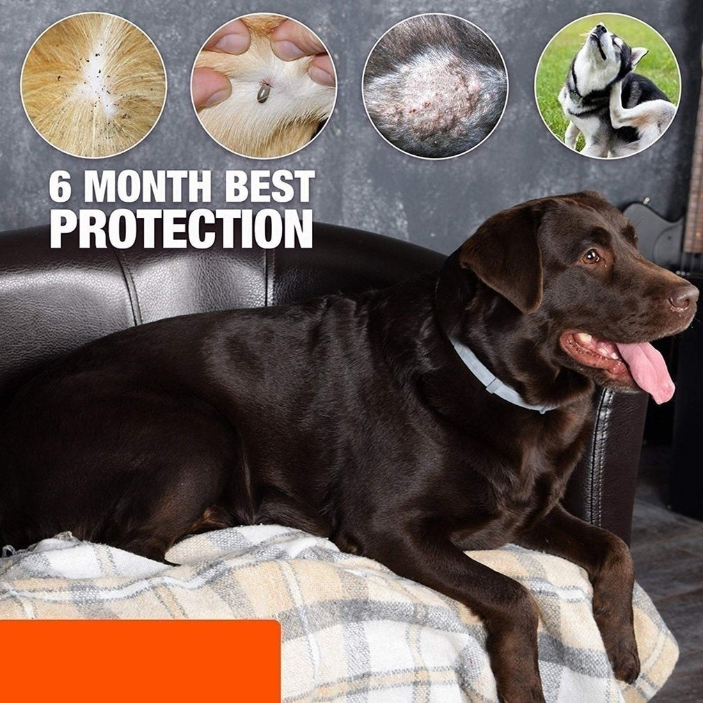 2020 New High Quality Bayer Seresto Flea and Tick Collar for Large Dog Over 18 Lb 8 Month Protection