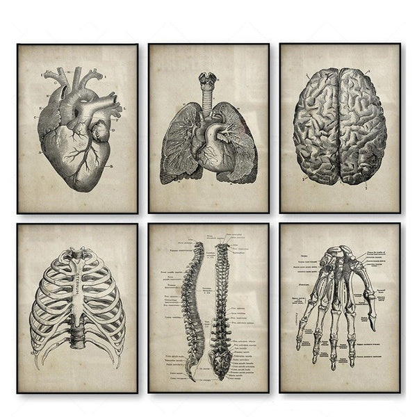 Medical Doctor Clinic Wall Pictures Decor Human Anatomy Science Vintage Posters Art Prints Medical Anatomy Canvas Painting Halloween Decoration Home Decor(No Frame)