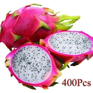 400 Pcs Pitaya White inside Red outside Sweet Dragon Fruit, Pitaya Cactus, Very Delicious fruit seeds for home garden planting SUM