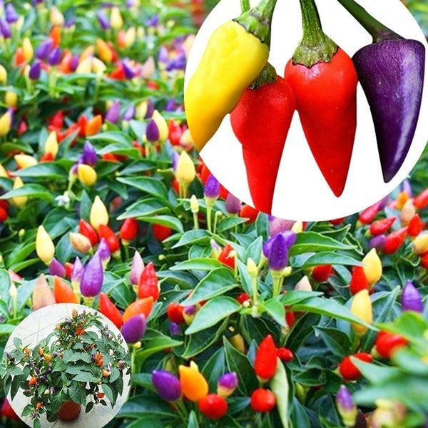 100pcs Multicolor Garden Balcony Potted Plant Pepper Seeds Vegetable Seeds Both Ornamental and Eat