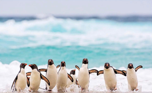 Penguins, humour