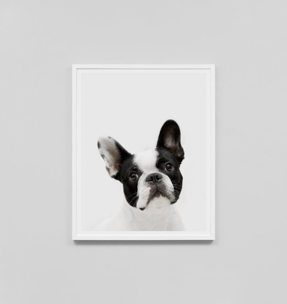 Buy French Bulldog Print online at - Sofas Direct