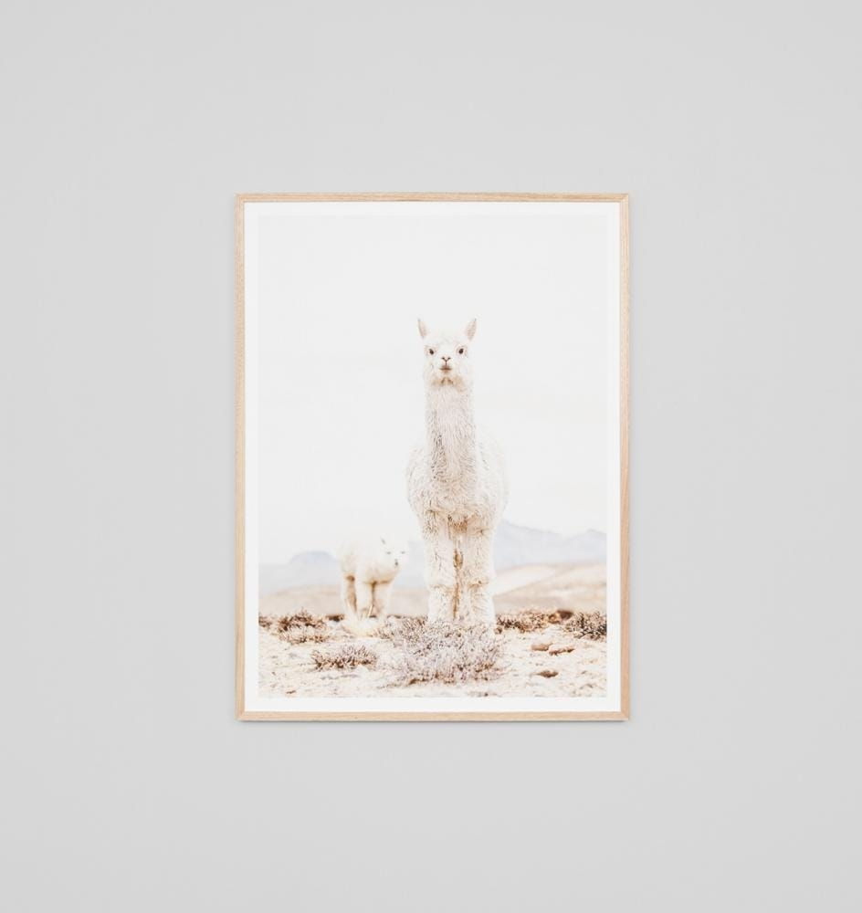 Load image into Gallery viewer, CURIOUS LLAMA - Sofas Direct