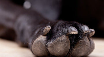 10 right ways to clean your dog paws