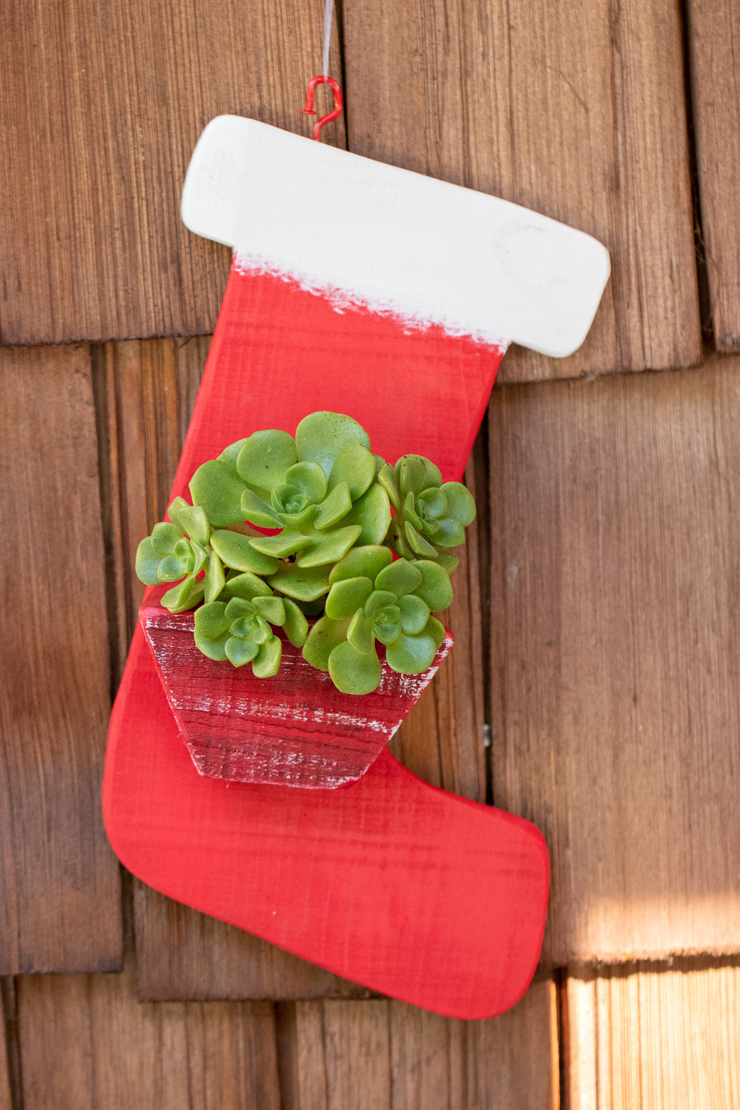Stocking full of succulents
