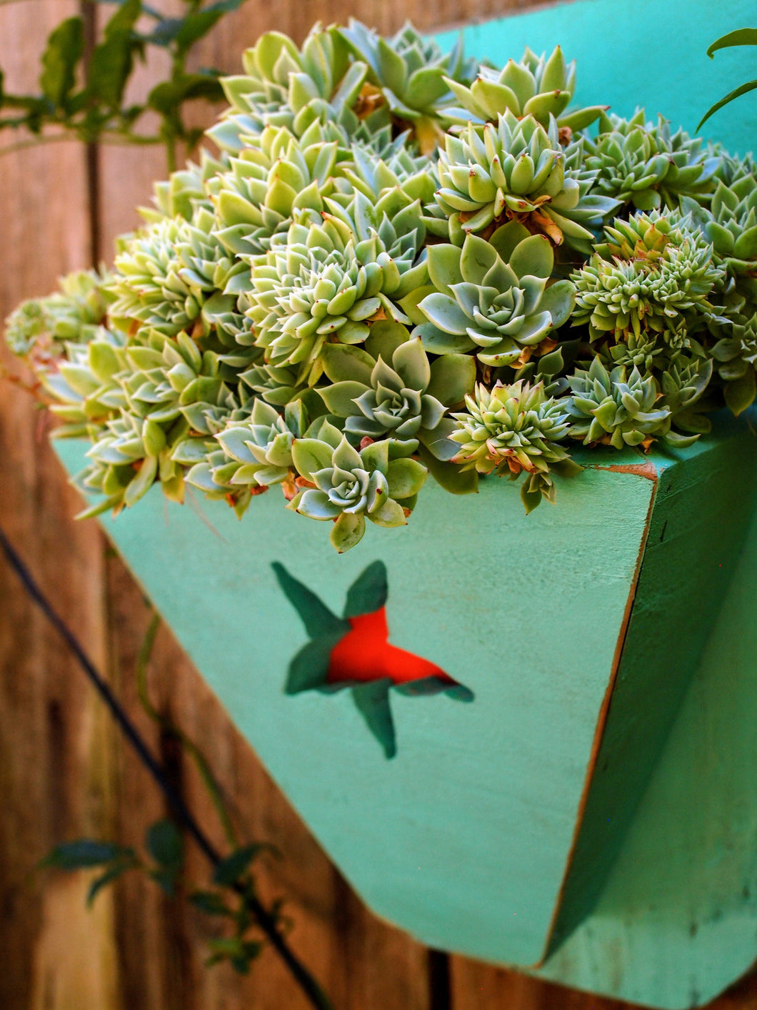 Turquoise planter with a coral starfish