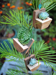 Cute succulent planter Succulent ornaments