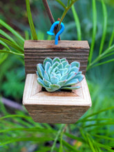 Load image into Gallery viewer, Cute succulent planter Succulent ornaments