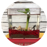 Froggy's Lair STEM products - science and engineering with African Dwarf Frogs bringing nature's connection in habitats suitable for today's busy lifestyle