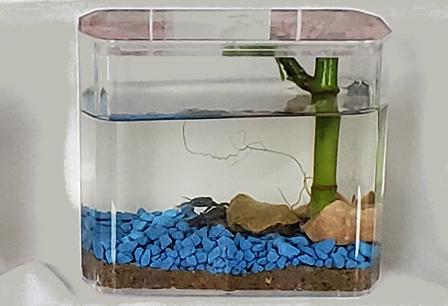 The Froggy's Lair Standard BioSphere™ with Heavenly Blue gravel is the perfect habitat for up to two African Dwarf Frogs