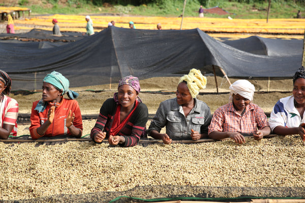New Coffee: Guji Sakaro from Ethiopia