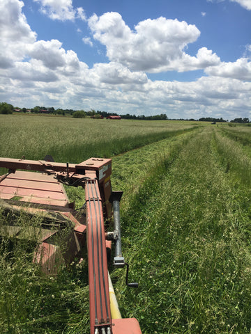 Using our old 7 disk 9ft New Idea mower conditioner