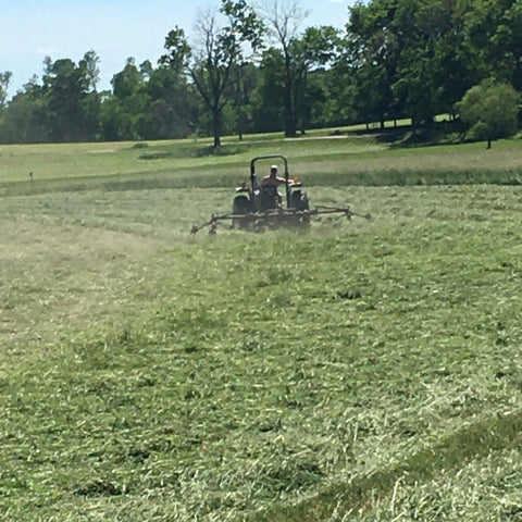 Using a hay tedder to spread out the hay for natural sun drying