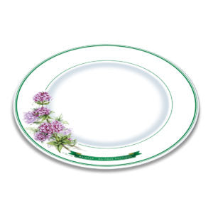A white bone china plate with green borders and illustration of marjoram