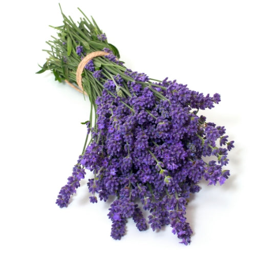 image of a bunch of lavender