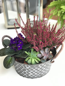 Plants Mix Vintage Metal Planter - Ambient Flores
