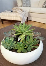 Load image into Gallery viewer, Succulent plants in Vase - Ambient Flores