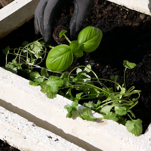 How to | Transplanting your seedlings