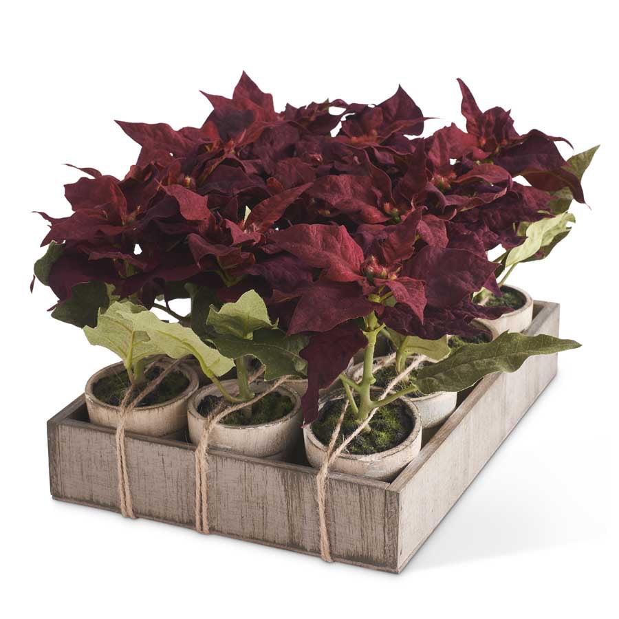 "Burgundy Potted Mini Poinsettia, Sold Individually 7 1/2""H"