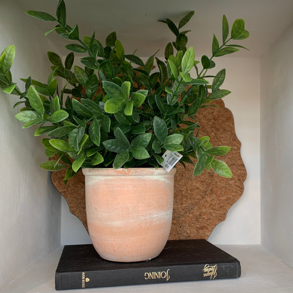 Herb in Terra Cotta Pot