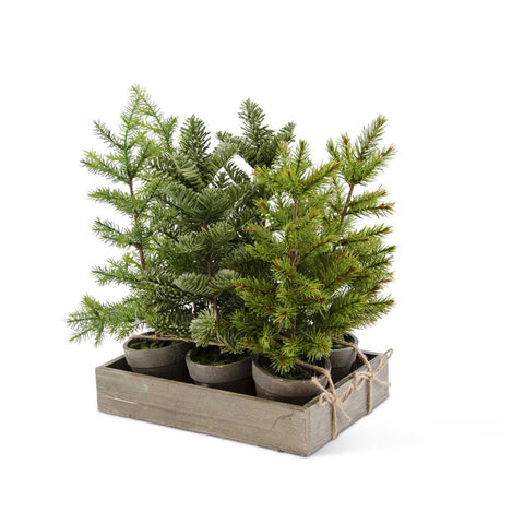 Potted Christmas Evergreen Tree, 3 Styles Sold Individually