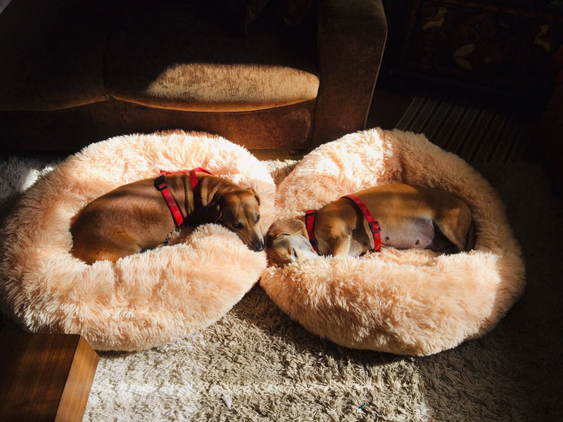 MADEYALOOK™ - Ultra Soft & Comfy Dog Bed