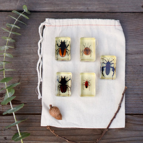 Insects Specimen Bundle -  Bugs
