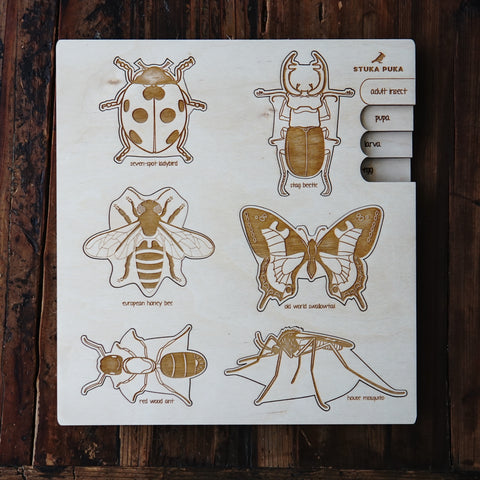 Insects Life cycle Puzzle